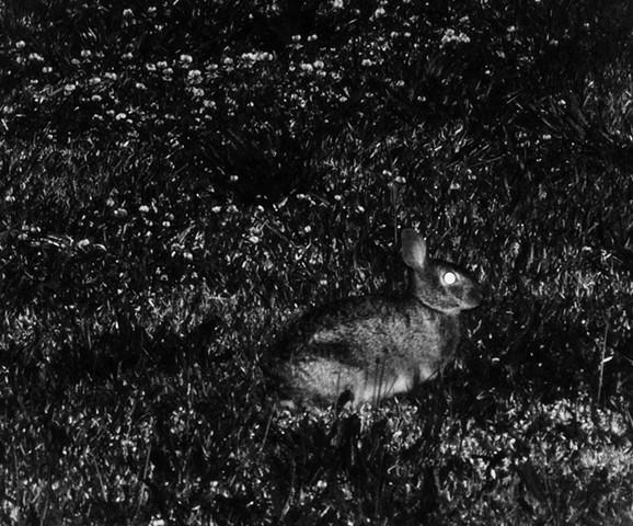 rabbit saw the moon