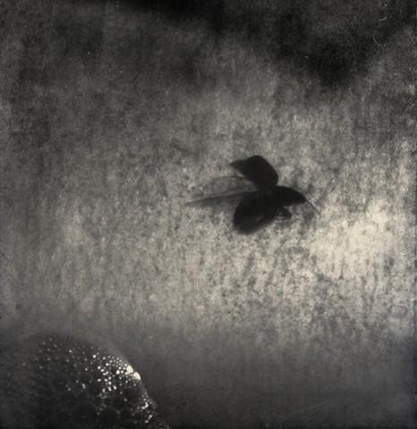 icarus had wings