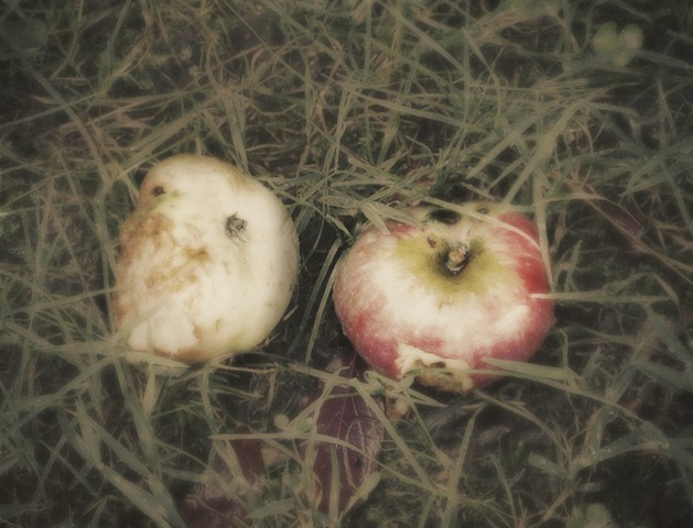 apples fall not too far from the tree