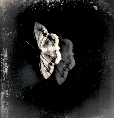 apparition of a moth