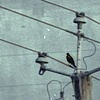 blackbirds have hearts too