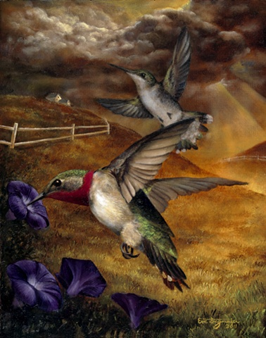 Ruby-throated hummingbirds and morning glories