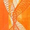 Orange Sketch II