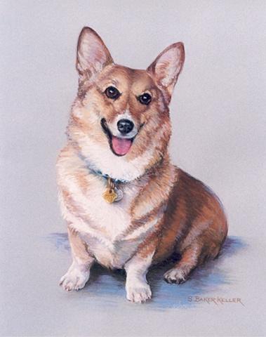 Pastel Portrait of a Corgi by Sally Baker Keller