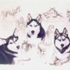"""Dog Composition"""