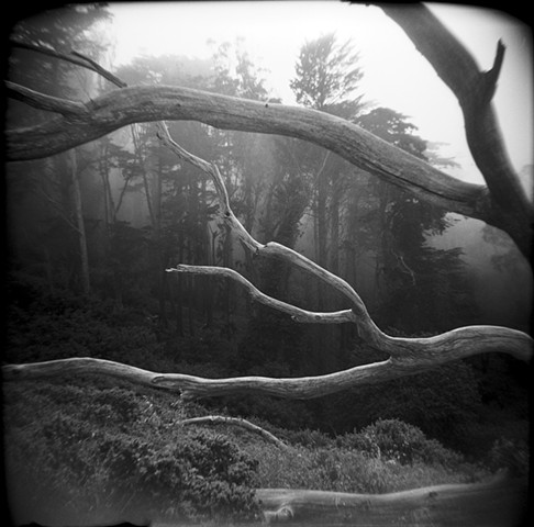 Mount Davidson, San Francisco, Branches and Forest