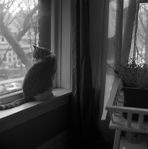 Sasha on Windowsill