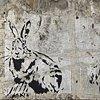 Rabbit #16 & #17