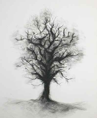 charcoal drawing on paper by Karen S Purdy artist