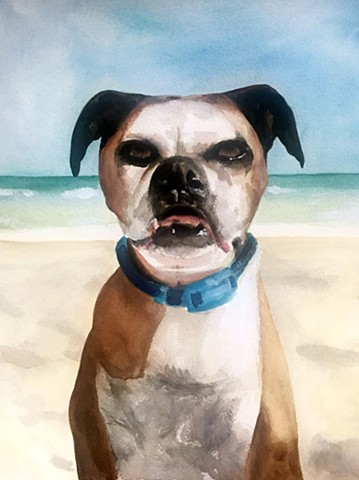 dog, watercolor, portraits, pet portraits