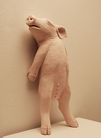 piglet backed up against a wall, standing and afraid