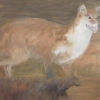 Red Fox (dead)