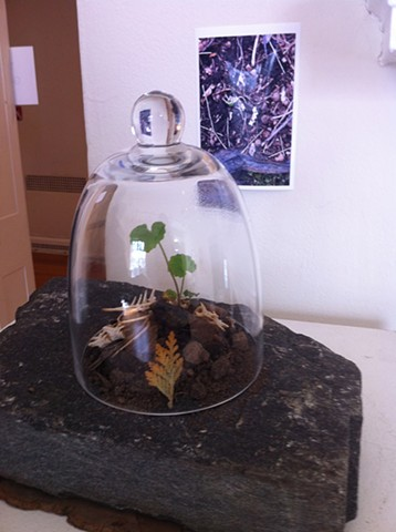 Seedling sprouting up through skeleton of small mouse under bell jar