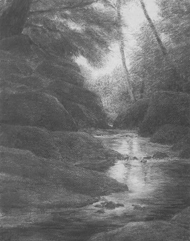 katherine meyer artist drawing charcoal redwoods california Big Basin