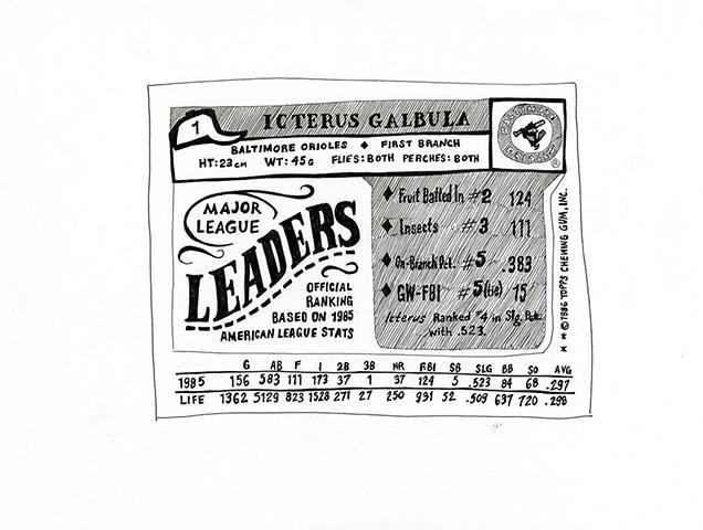 Icterus galbula- back