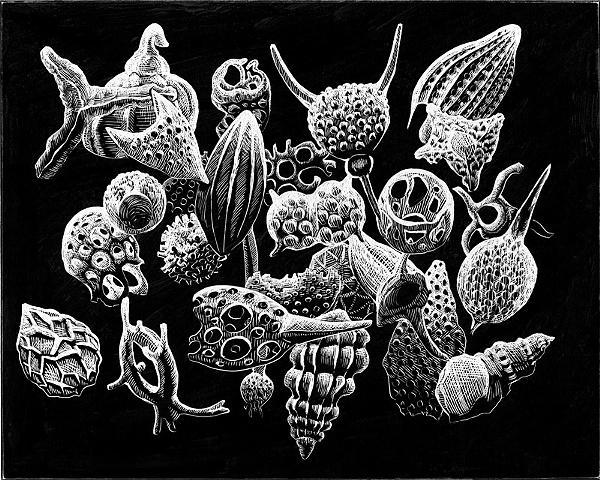 radiolarian ooze