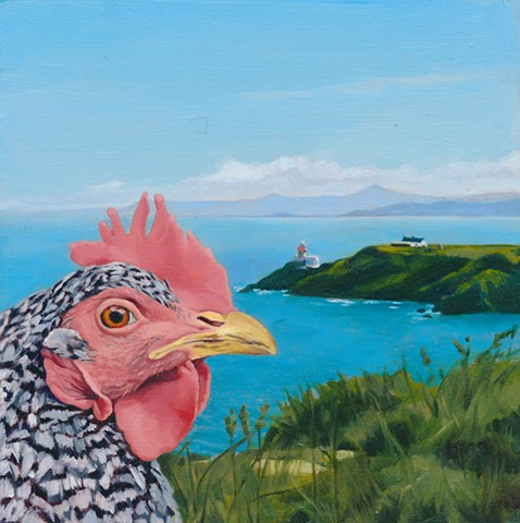 Chicken at Howth, Ireland. Chicken in Irish landscape.