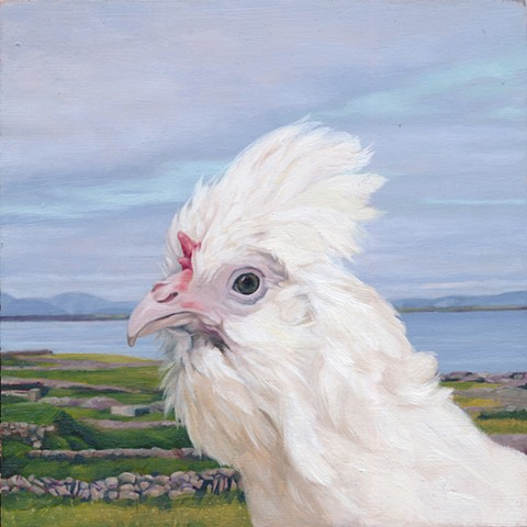 Chicken on Inis Mor, Aran Islands. Irish landscape with chicken.