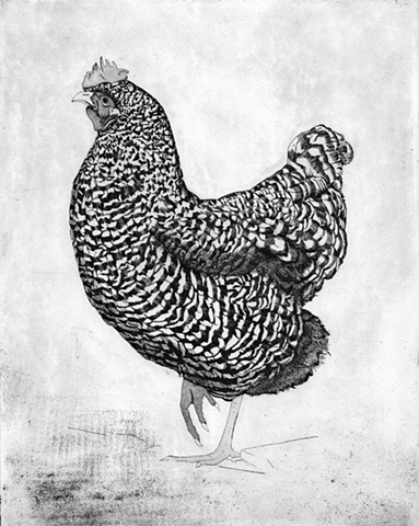 Chicken etching and aquatint print by artist Chantelle Norton.