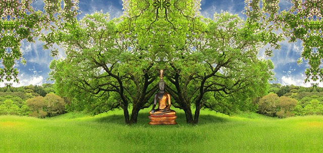 buddha in trees meditating on hillside creates place of solace and comfort