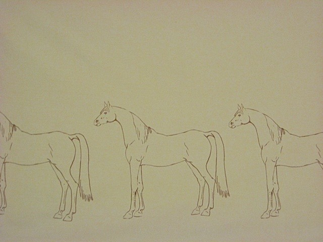 all my horses in a row.