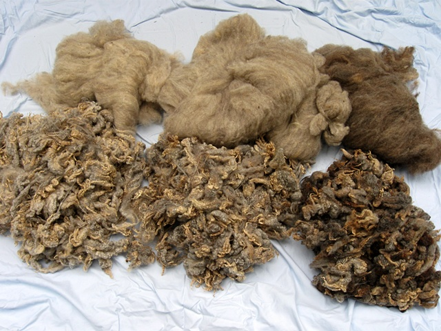 photo of carded and un-carded sheeps wool