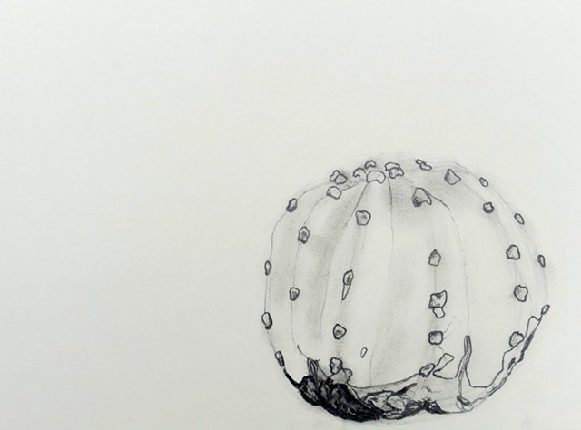 graphite drawing of a potted cactus by chelsea clarke