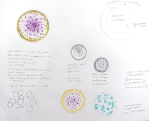 Field notes page natural history illustration of coscinodiscus diatom, plankton, algae by Chelsea Clarke.