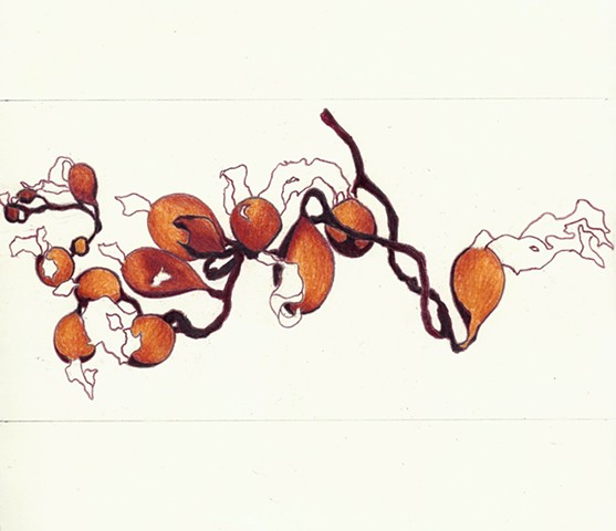 colored pencil drawing of seaweed by Chelsea Clarke
