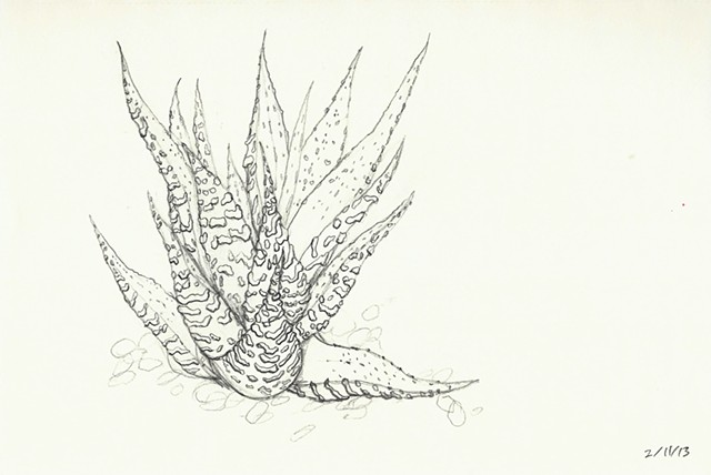 graphite drawing of a succulent house plant by chelsea clarke