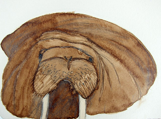 Mixed media drawing of a floating walrus in the Chukchi Sea off Alaska. Walnut ink on rives BFK printmaking paper by Chelsea Clarke