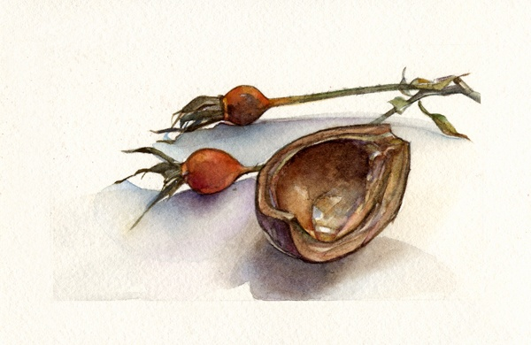 Chestnut and Rosehips