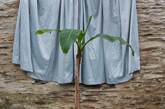 photograph of plant green curtains drapery stone building still life by Robyn LeRoy-Evans
