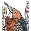 HIDDEN (Green Heron)