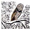 THE WATCHER (Barn Owl)