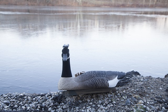 Pace Investigations No. 6.2 (Winter) Goose Cam