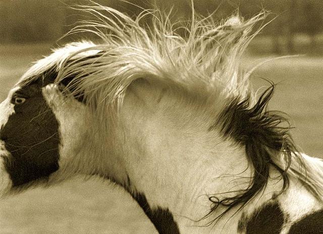 equine Photography, Equine Prints