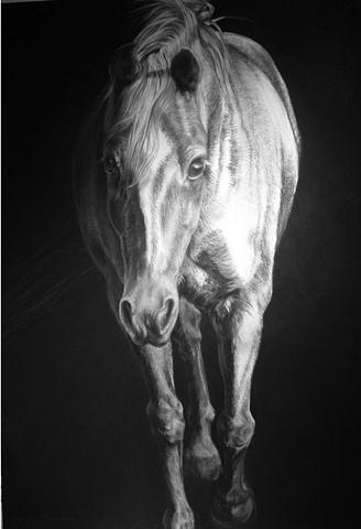 Equine Drawings, Equine Art, Equine, Horse Art