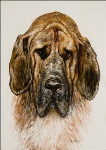 pet portrait, scratch board