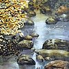 Aspen Stream #3