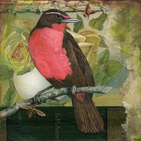 Mixed-media collage of a Rose-Breasted Thrush Tanager from Cincinnati artist Sara Pearce's bird series, Out On A Limb. Made with antique, vintage and recycled papers