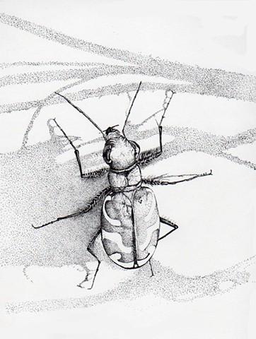 Tiger Bug