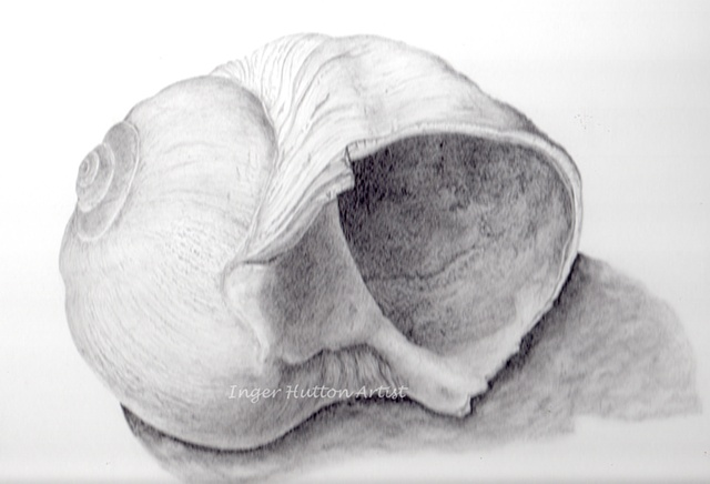 Moon Shell Graphite