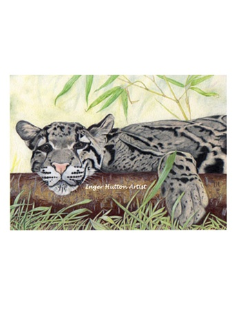 Clouded Leopard, colored pencil drawing