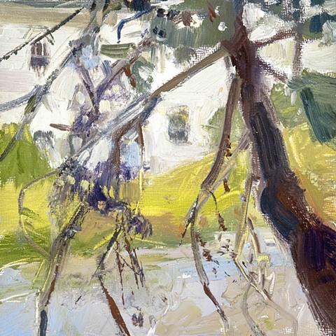 Crooked Tree- WIlton