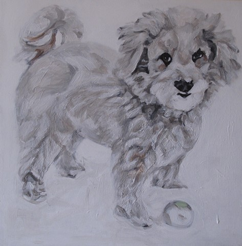 pet portraits by kira birney macho