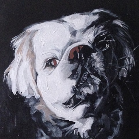 pet portraits by kira birney magee