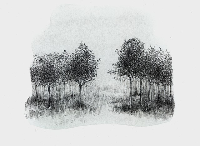 Small grouping of trees inspired by Holden Arboretum near Cleveland, Ohio