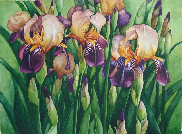 Irises-Triplets-Framed