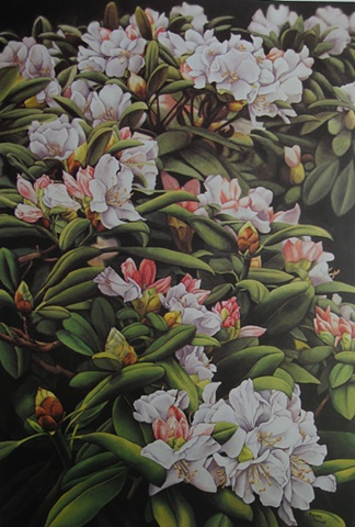 Longwood Rhododendrons-Print Only